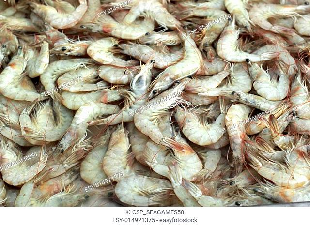 Fresh shrimp in the markets