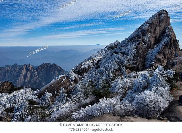 Winter wonderland, trees covered with rime after freezing snow, Huangshan National Park, Anhui, China