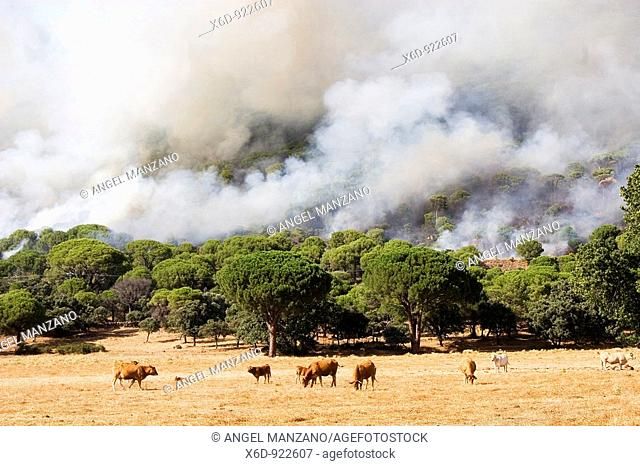 Forest fire in Avila province, Spain