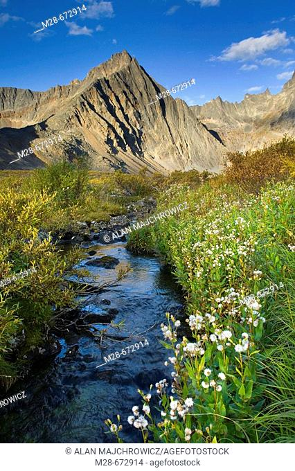 Grizzly Creek, Tombstone Territorial Park, Yukon, Canada