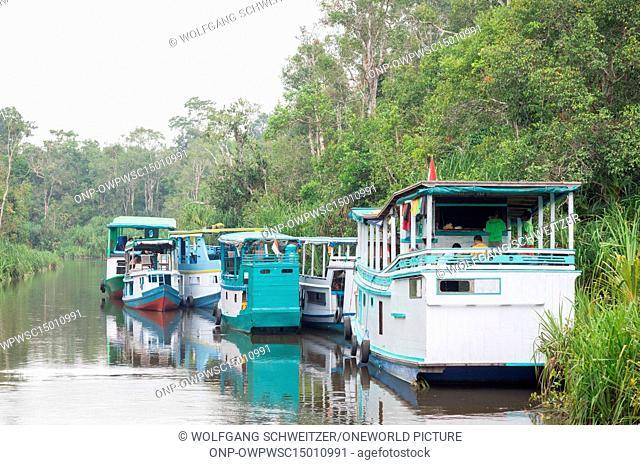 Indonesia, Kalimantan, Borneo, Kotawaringin Barat, Tanjung Puting National Park, Several boats on the Sekonyer River