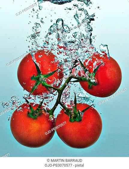 Close up of tomatoes on vine splashing in water