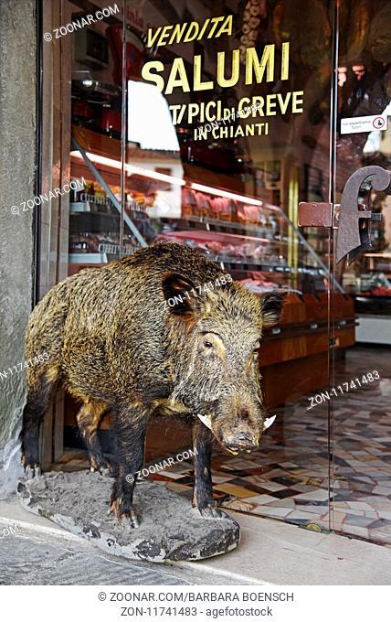 boar, specialty shop, Greve in Chianti, Tuscany, Italy, Europe, Wildschwein, Spezialitaetengeschaeft, Greve in Chianti, Toskana, Italien, Europa