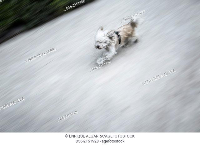 Running dog, Viveros municipales, Jardines del Real, Garden, Valencia, Spain