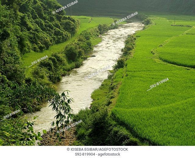 Rice fields, China