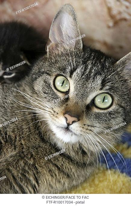 Close up of a cat staring at the camera
