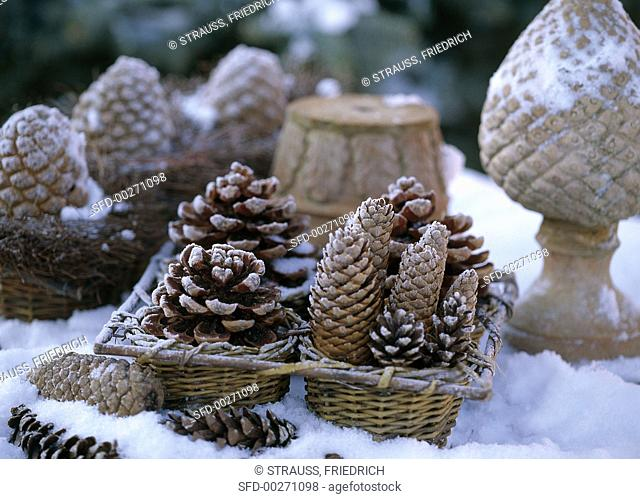 Arrangement of pine and spruce cones in snow