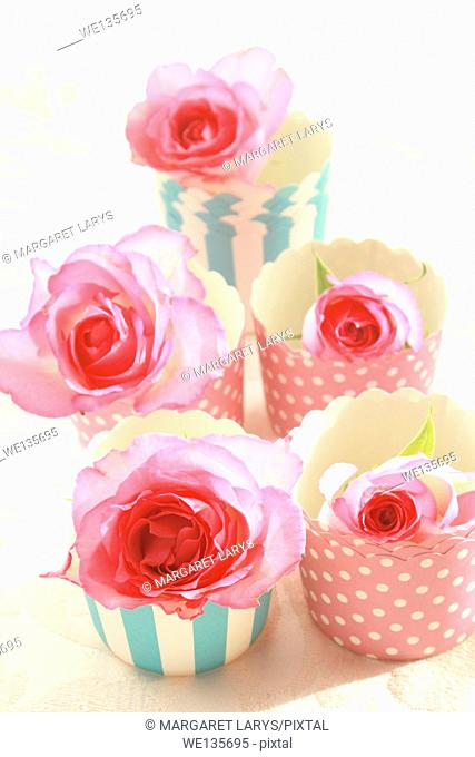 Pink roses in muffiin cups, still life