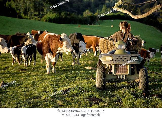 Farmgirl on quadbike shifting stock