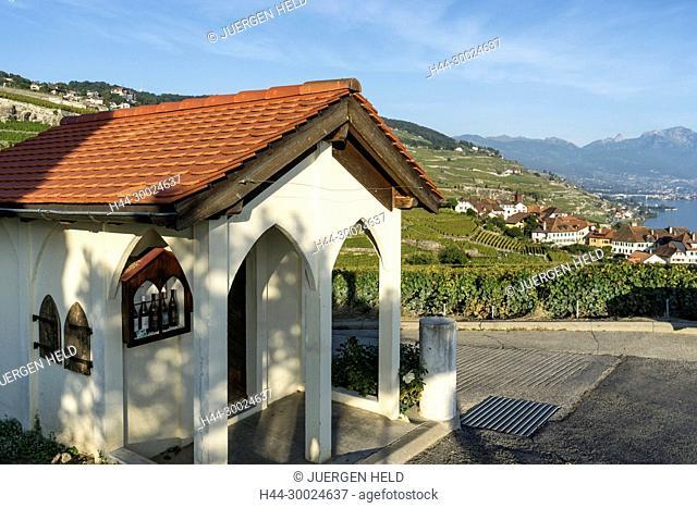 Vineyards , Rivaz, Lavaux region, Lake Geneva, Swiss Alps, Switzerland