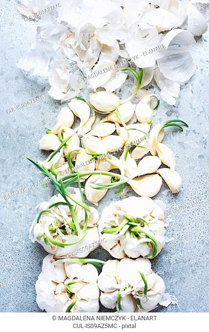 Overhead view of sprouting garlic bulbs and peeled cloves