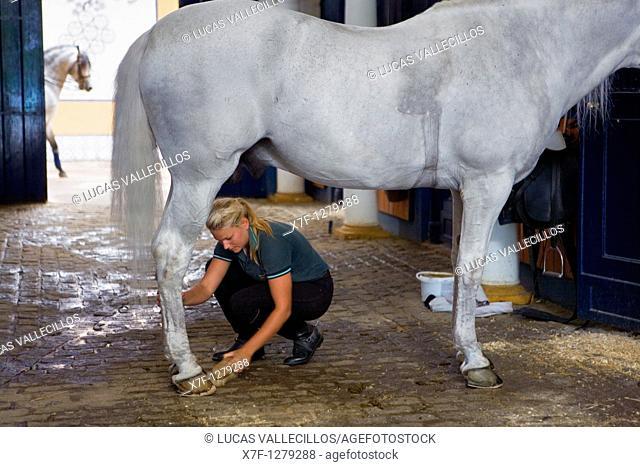 Riding stables of Royal Andalusian School of Equestrian Art  `Real Escuela Andaluza Del Arte Ecuestre'  Jerez de la Frontera  Cádiz province, Andalusia, Spain