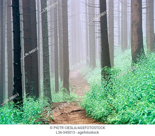 A road in the forest. Tatra mountains. Poland