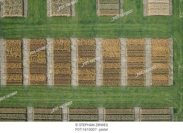 Full frame aerial view of crops in agricultural landscape, Stuttgart, Baden-Wuerttemberg, Germany