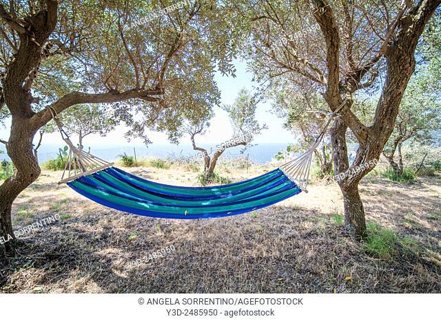Hammok under Olive Trees, Greece