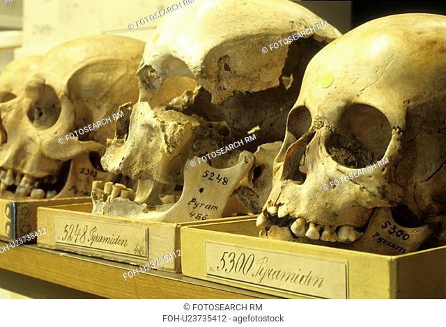 human skullswien museum abteilung vienna natural
