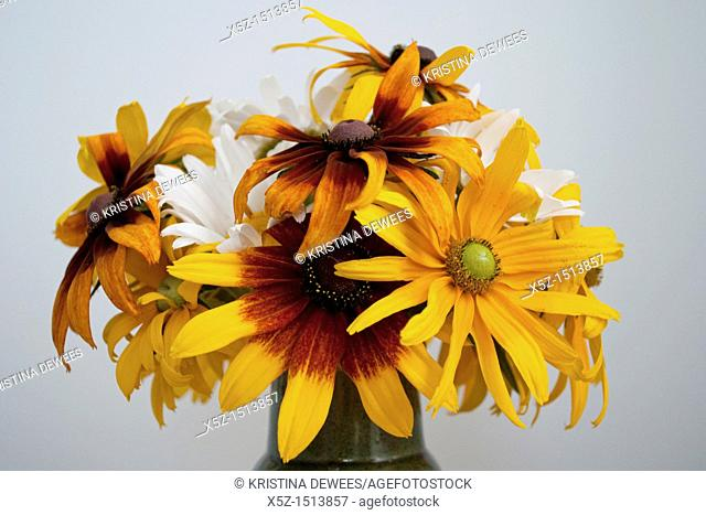 A combination of Shasta Daisies and annual Rudbeckia Hirta in a vase