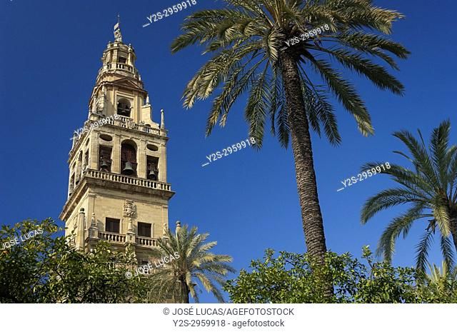 Cathedral, Old Arab mosque - minaret, Cordoba, Region of Andalusia, Spain, Europe