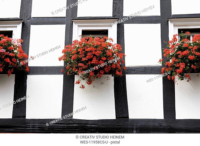Germany, North Rhine-Westphalia, Freudenberg, Flower boxes on half-timbered house, close-up