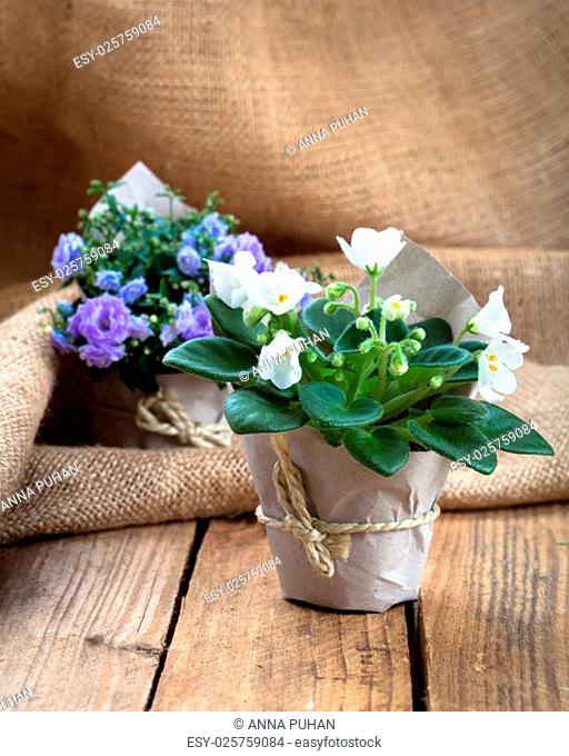 blue saintpaulia (gesneriaceae) and bellflowers (campanula) flowers,on burlap,on wooden background