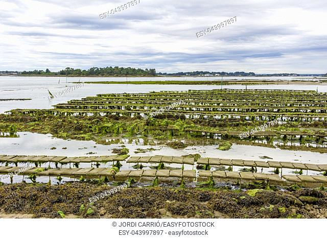 Views of the oyster and mollusc farming areas in Île du Saint-Cado, Brittany, France