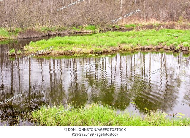 Spring foliage reflections in Fairbank Creek, Greater Sudbury, Ontario, Canada