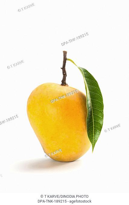 Mango fruit on white background India Asia
