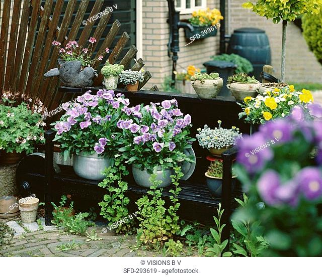 Terrace with flowering plants in containers