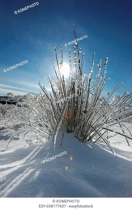 Plant covered in ice after a major winter storm