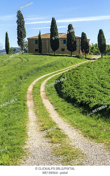 Country road leading to Podere Cipressini, in the outskirts of Pienza, Val d'Orcia, Tuscany, Italy