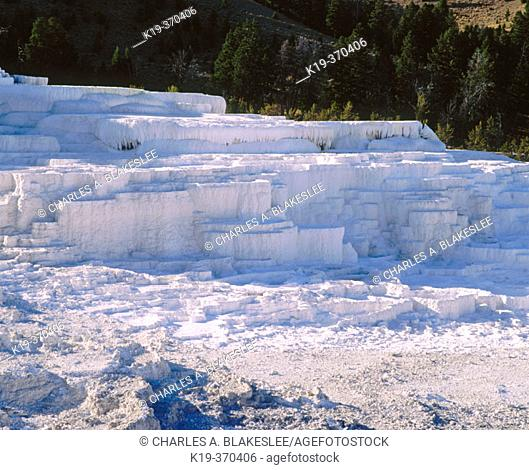 Minerva Terrace, Travertine formations (Calcium carbonate). Mammoth Hot Spring Terraces. Yellowstone National Park. Teton County. Wyoming. USA