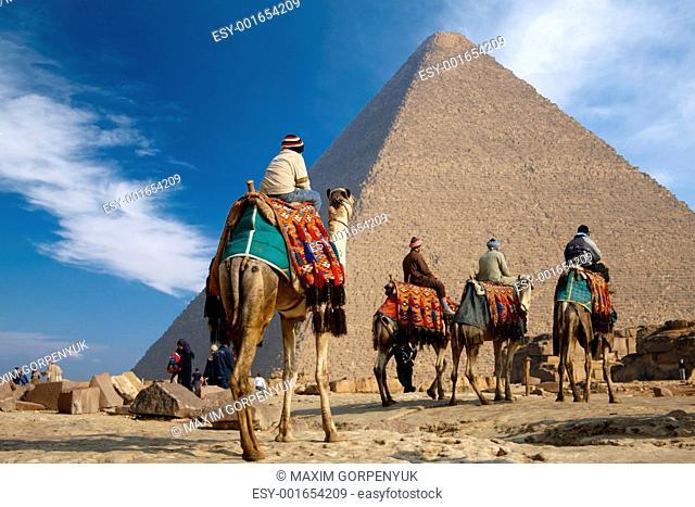 bedouin on camel near of egypt pyramid