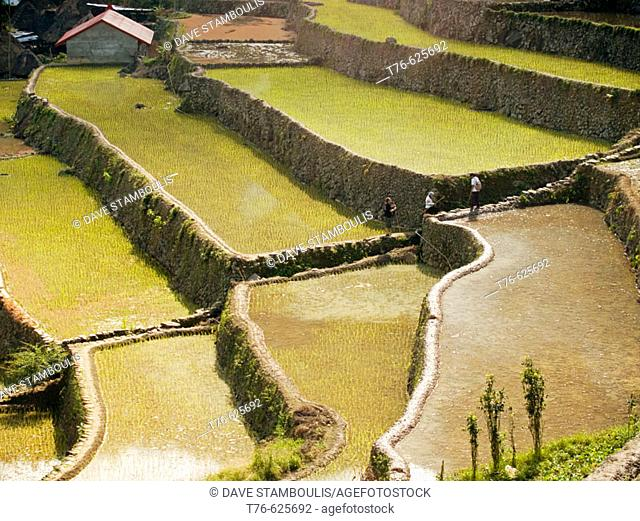 rice reflections, UNESCO World Heritage Site Batad and its famed stonewall terracing