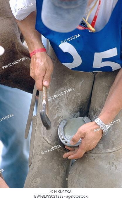nailing of a lost horseshoe