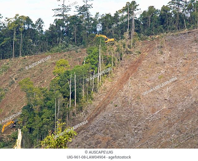 Clear felling of subtropical rainforest with emergent Hoop pine, Australia