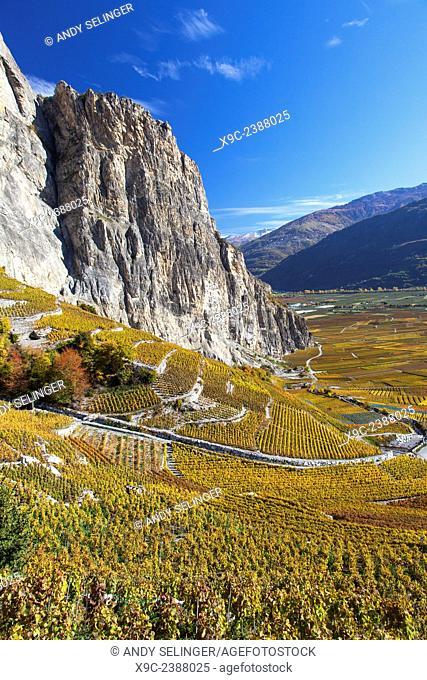 Vineyard Around Chamoson, Valais, Switzerland