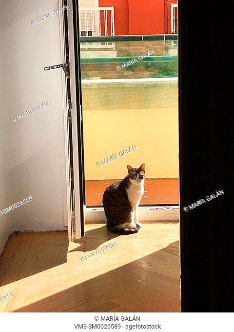 Cat sitting by an open door sunbathing
