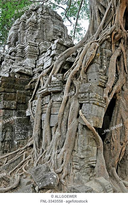 Overgrown roots on old ruins, Ta Prohm Temple, Angkor, Cambodia, close-up