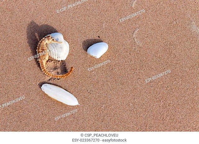 Cuttlebone and sea horse on sand