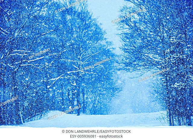 Digitally enhanced image of snow falling on trees, Stowe, Vermont, USA
