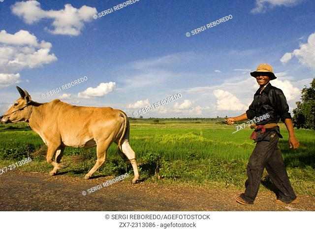 Farmer with a cow near Kampi. Kratie. Kratié or Kraches is a province (khaet) of Cambodia located in the northeast. It borders Stung Treng to the north