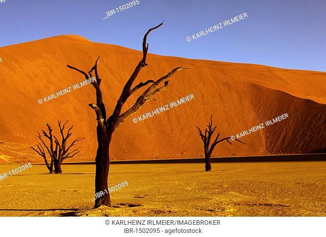 Dead trees, Deadvlei, Sossusvlei, Namibia, Africa