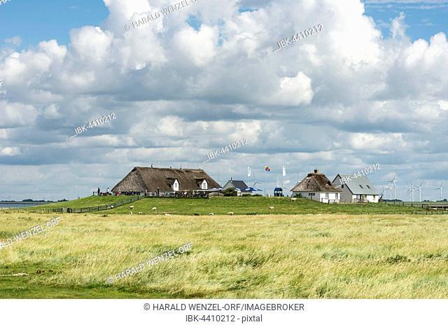 Hamburger Hallig, Wadden Sea National Park, UNESCO World Heritage Site, Reußenköge, Schleswig-Holstein, Germany