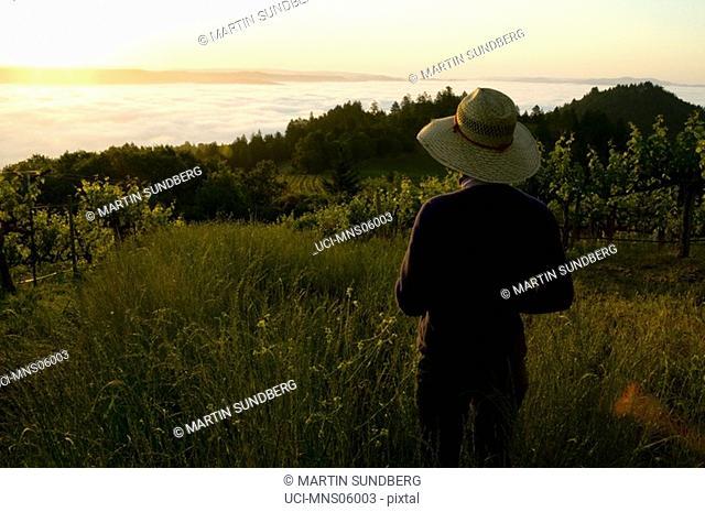 Woman standing in vineyard at sunrise, Mountain Vineyard, Napa Valley, California
