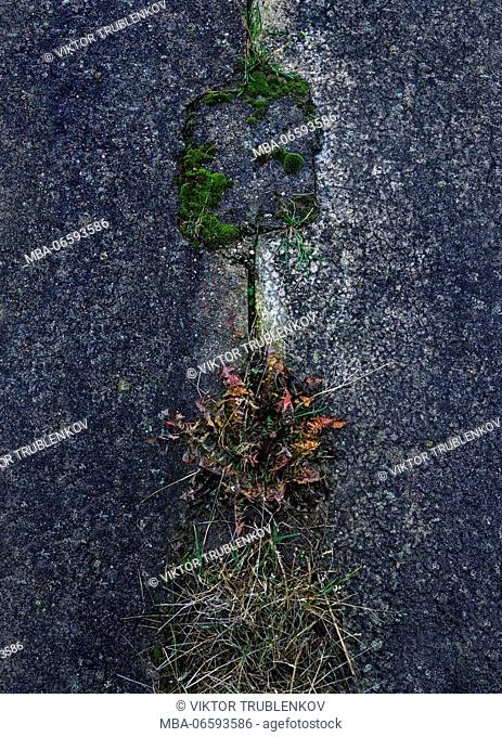 Natural Science, Autumn grass on cement