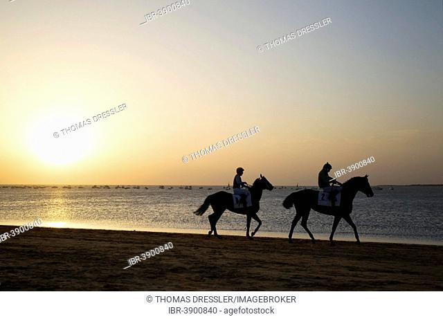 Riders riding towards the starting gate, horse race at the beach of Sanlúcar de Barrameda at the Guadalquivir river mouth, at sunset, Cádiz province, Andalusia