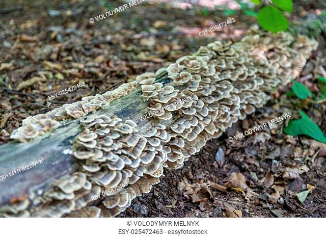 Stump with moss-covered brown and white mushrooms