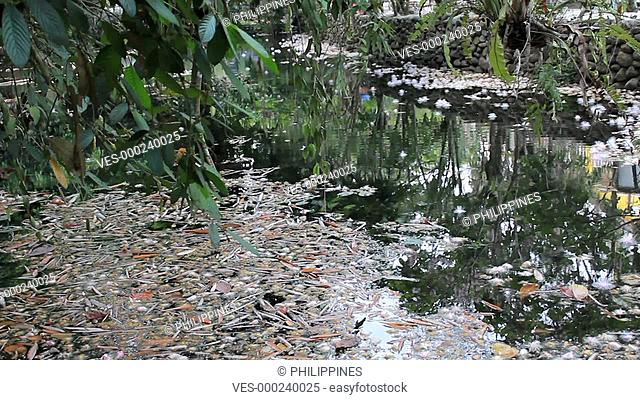 lake / pond water in a forest