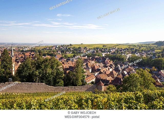 France, Alsace, Alsatian Wine Route, Ribeauville historic village, vineyards, autumn, late summer