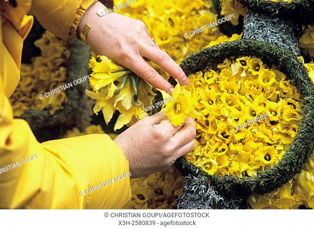pinning wild daffodil Narcissus pseudonarcissus to ornate parade floats of the ''Fete des Jonquilles'' Dafodill festival, Gerardmer, Vosges department